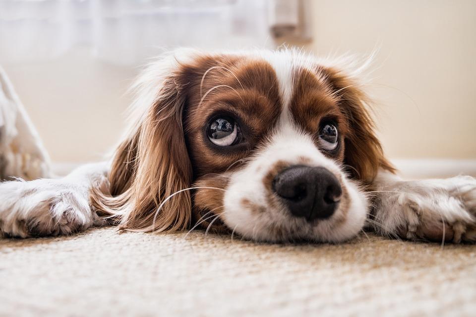 Hondenhaar verwijderen