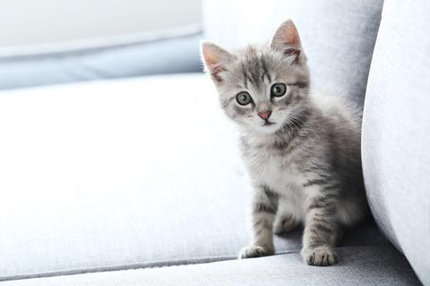 Kattenpis goed en grondig verwijderen.